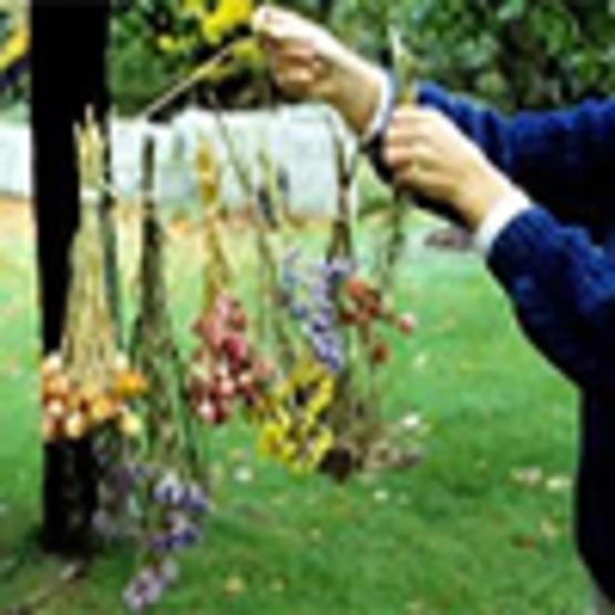 Drying Flowers - air drying