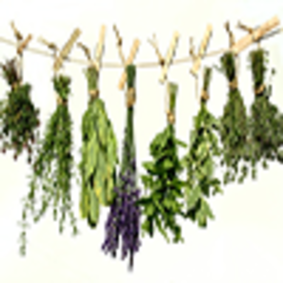 Herbs - Harvesting and Preserving