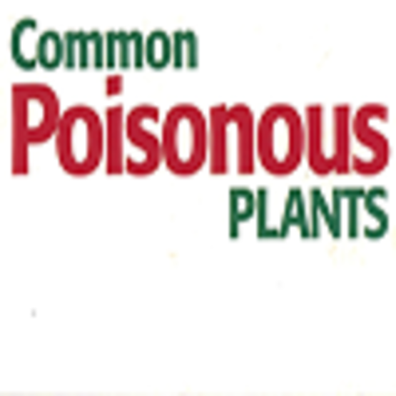 A Guide to Common Poisonous Plants and Shrubs
