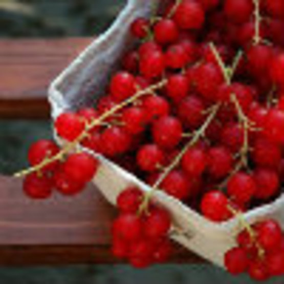 Guide to Growing Currants and Gooseberries