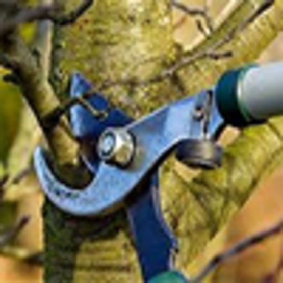 Apple and Pear Tree Pruning