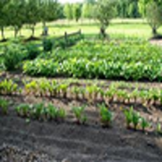 The Home Vegetable Garden Guide