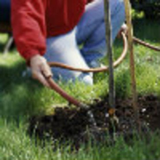 Watering Trees & Shrubs