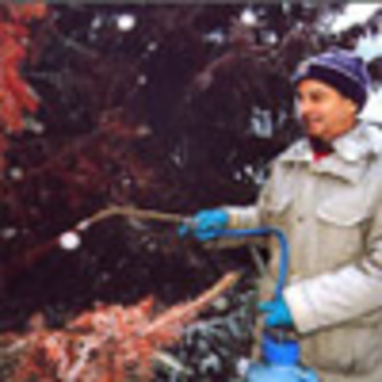 Cornell Plantations' Pink Ugly Mix Saves Trees from Holiday Thieves