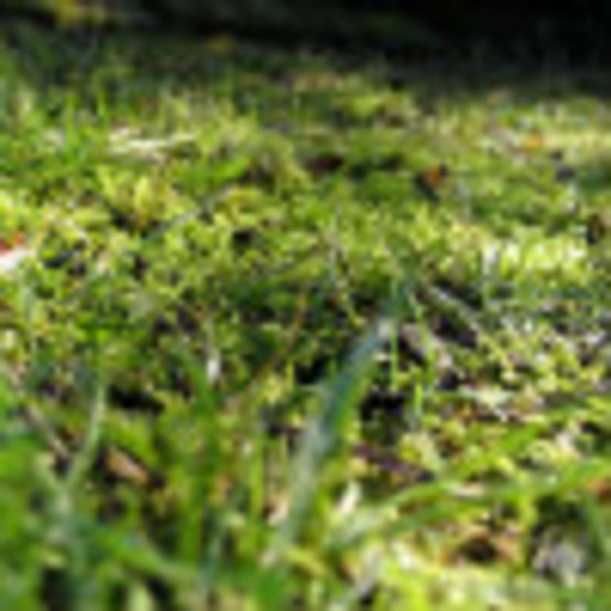 Controlling Moss and Algae in the Home Lawn