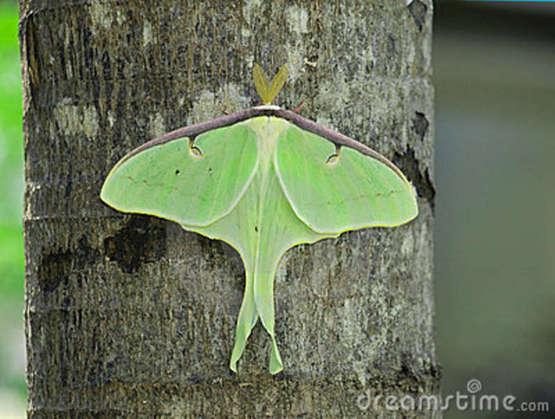 Growing Moths