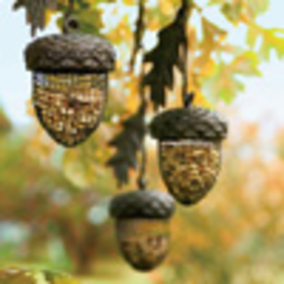 Bird Feeder Types