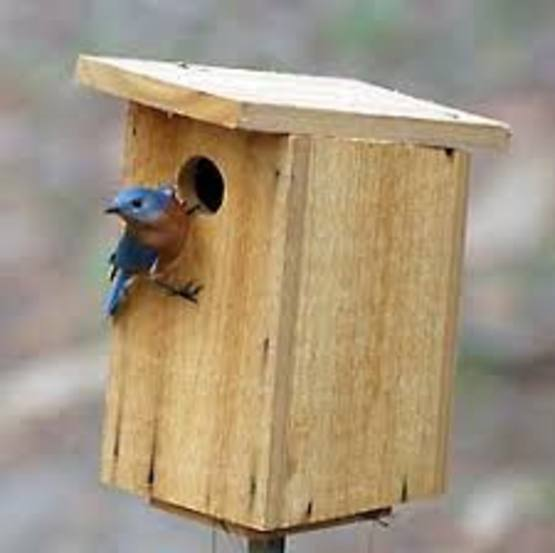 Eastern Bluebird Nesting Box Construction
