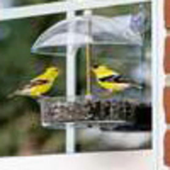 Where to Locate Bird Feeders