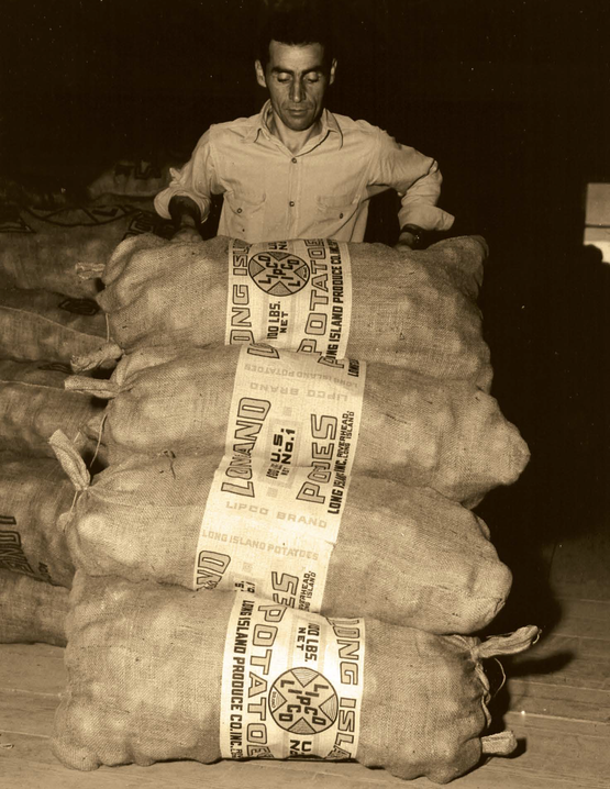 vintage photo of a man hauling potatoes