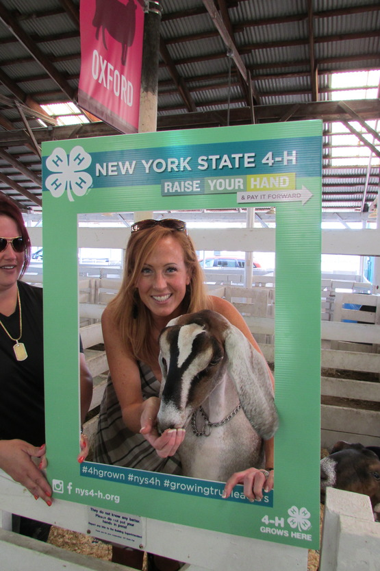 4-h county goat show