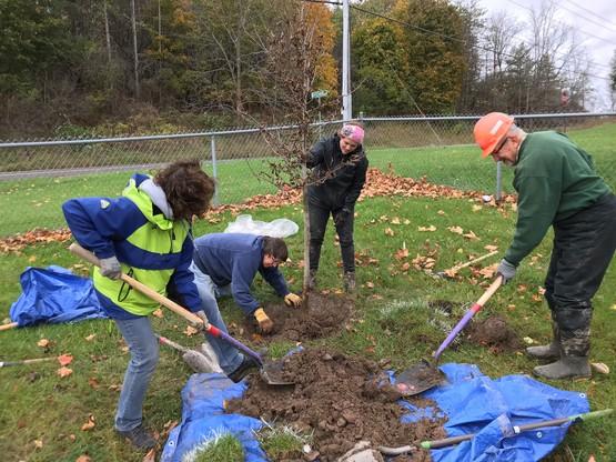 Camillus Tree Planting