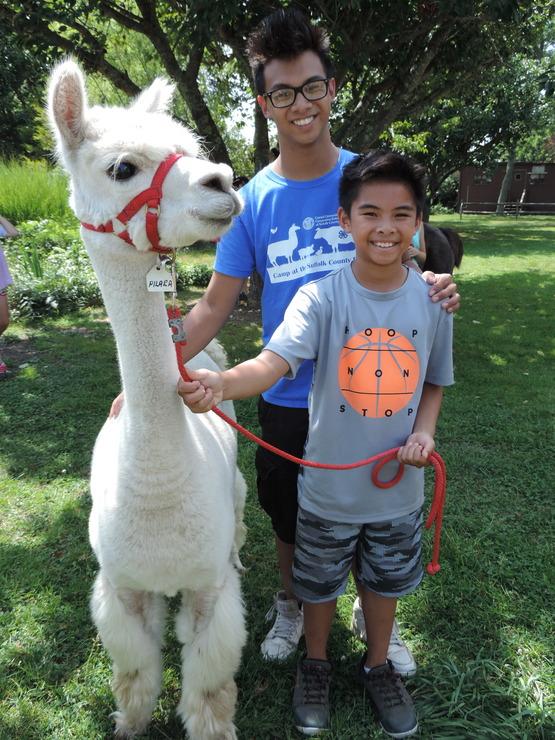 Suffolk County Farm camper with llama