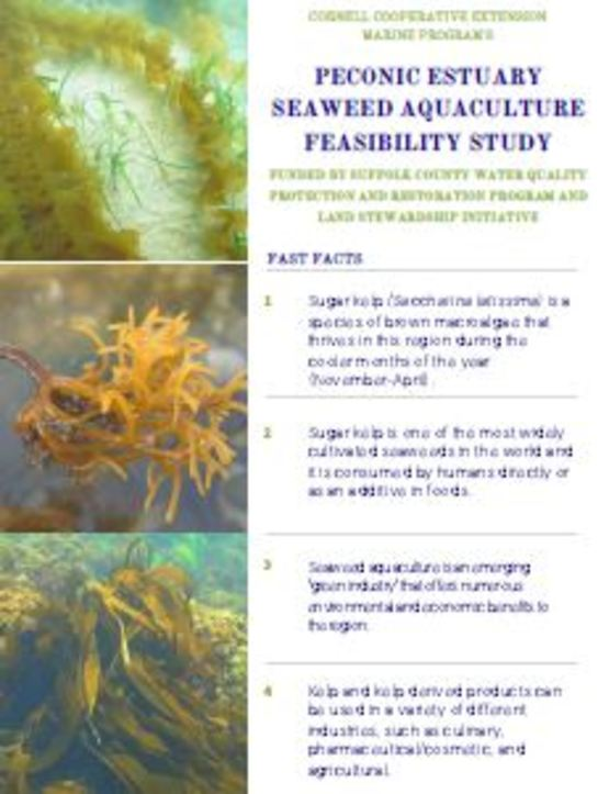 Cornell Cooperative Extension | Kelp Aquaculture Feasibility