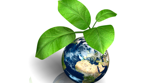 Earth with a plant growing from the surface. Perfect for general environmental messages.