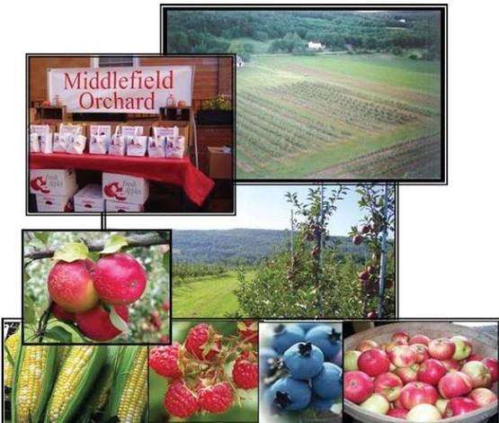 Middlefield Orchard