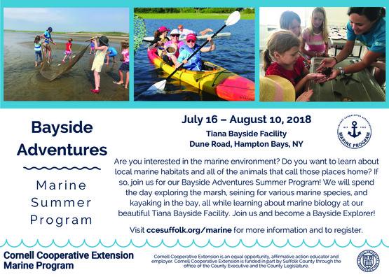 Bayside Adventures Summer Program
