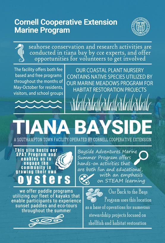 Tiana Bayside postcard
