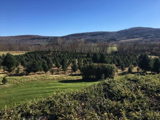 Lundin's Tree Farm