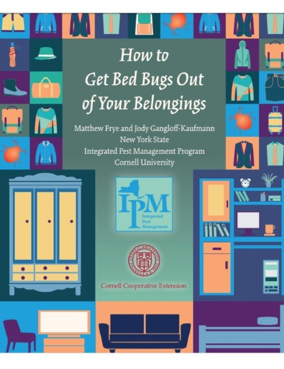 Guide:  how to get bed bugs out of your belongings