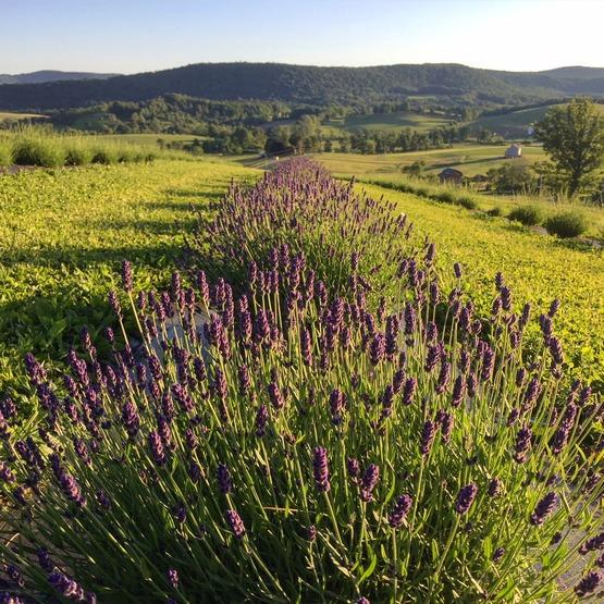 Slate Hill Flower Farm