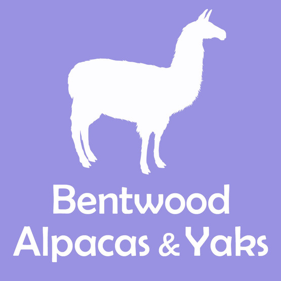 Bentwood Alpacas and Yaks