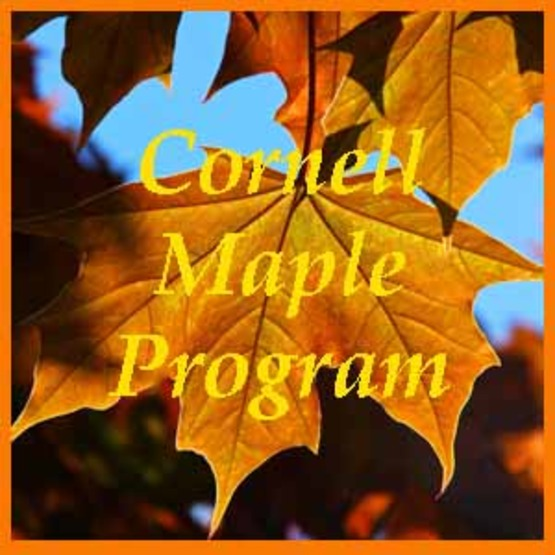 Maple leaf with Forest maple program written over it