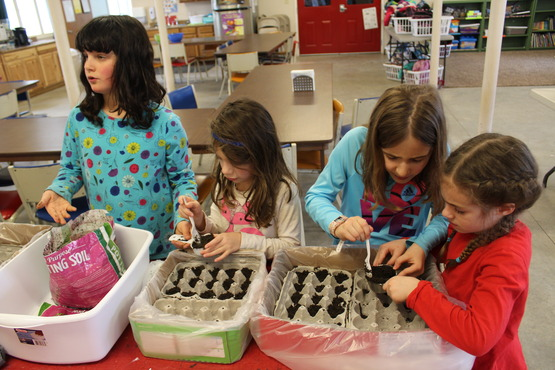 Planting seeds during After School.