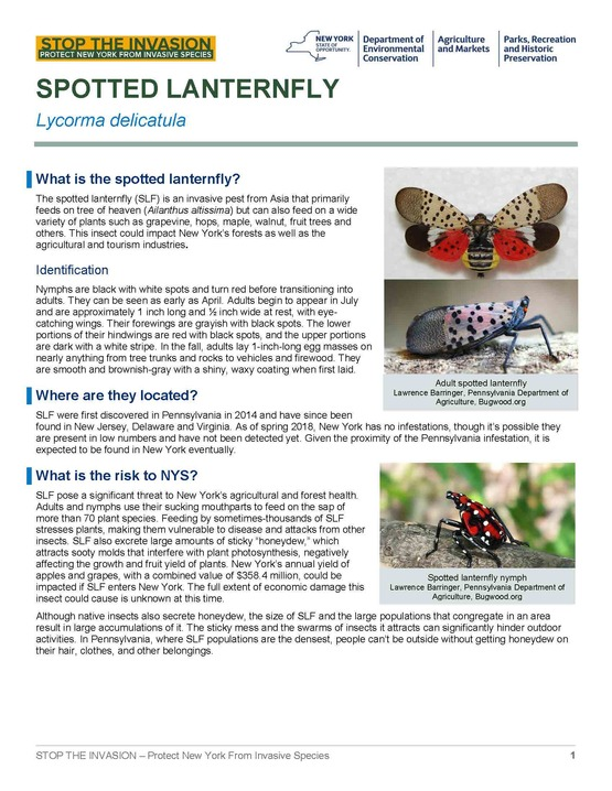 Spotted Lanternfly Fact sheet page 1