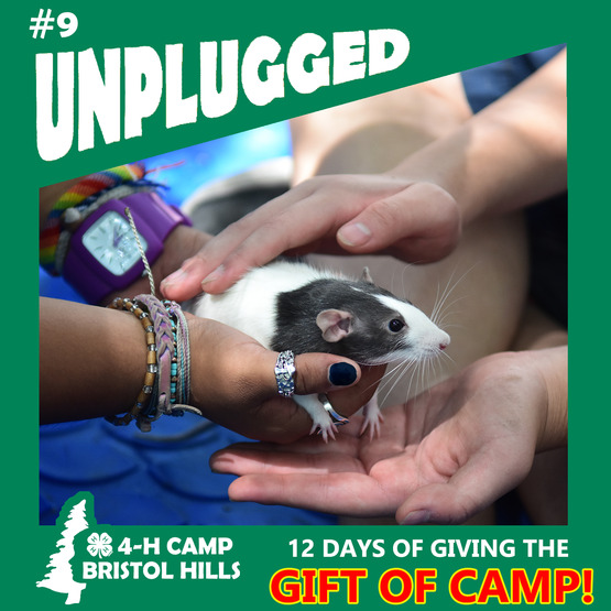 Giving the Gift of 4-H Camp: Unplugged