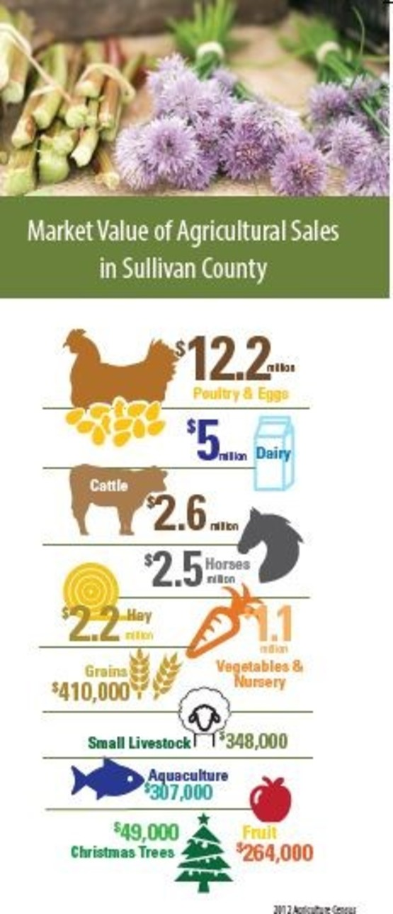 Market Value of Ag Sales in Sullivan County Brochure Cover