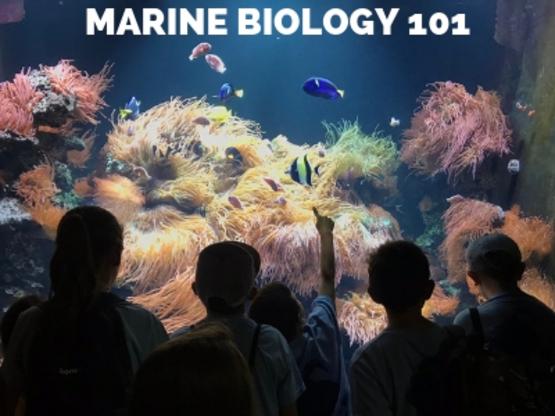 SAMC Marine Biology 101