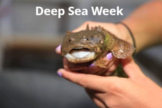 SSMC Deep Sea Week