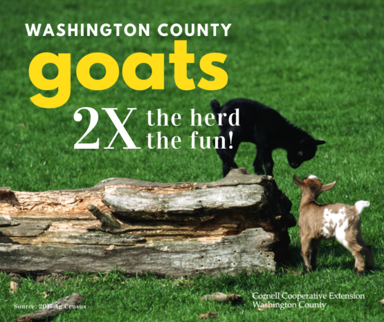Goats in Washington County