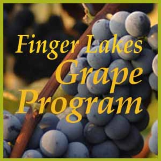 Visit the Finger Lakes Grape Program online