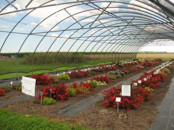 Shade Garden Report Pic