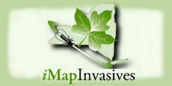 Logo for iMap Invasives