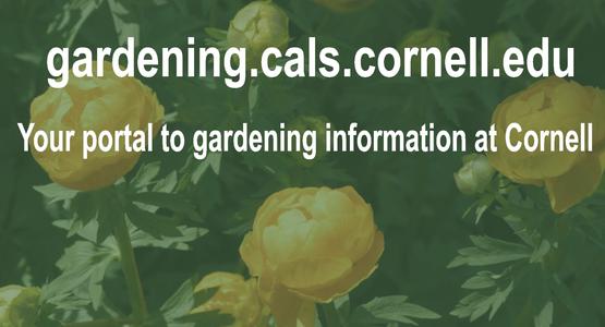 Visit Cornell Garden-Based Learning website