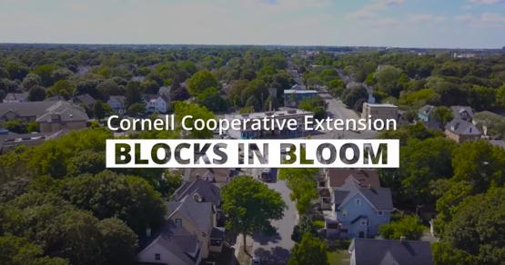 Blocks in Bloom video