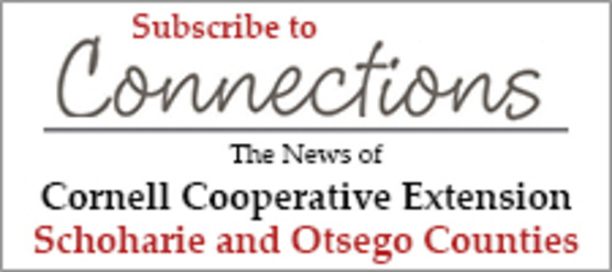 Subscribe to Connections Newsletter
