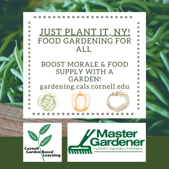 Just Plant It, NY