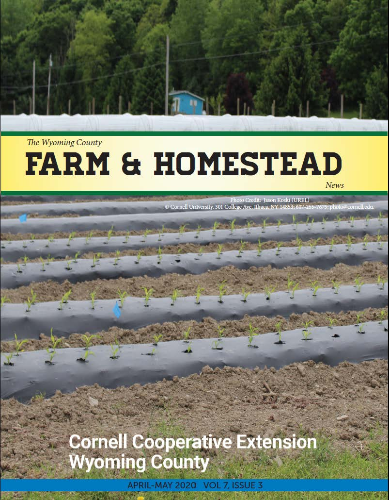 Farm and Homestead April-May 2020