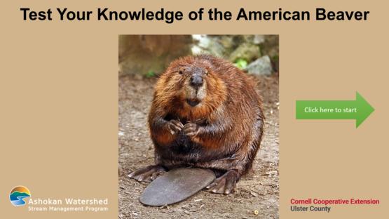 Beaver Quiz