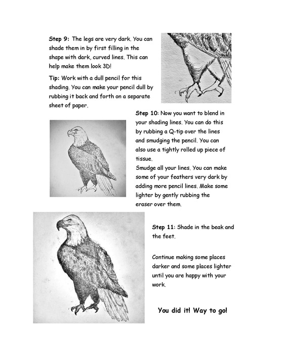 How to draw a bald eagle page 4