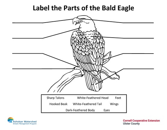 label the parts of the bald eagle