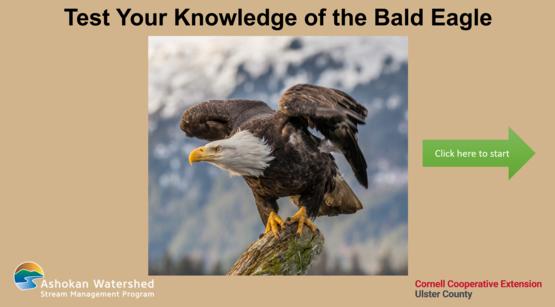Bald Eagle Quiz