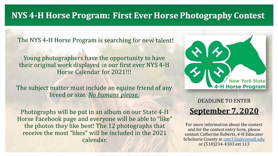 Horse Photography Contest