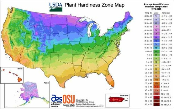 USDA plant hardiness map of the USA
