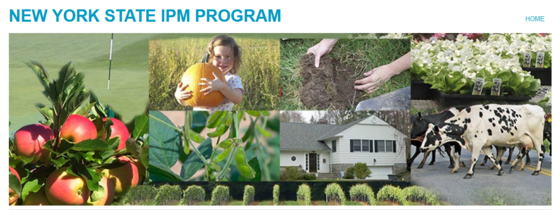 Visit the NY State IPM Program online