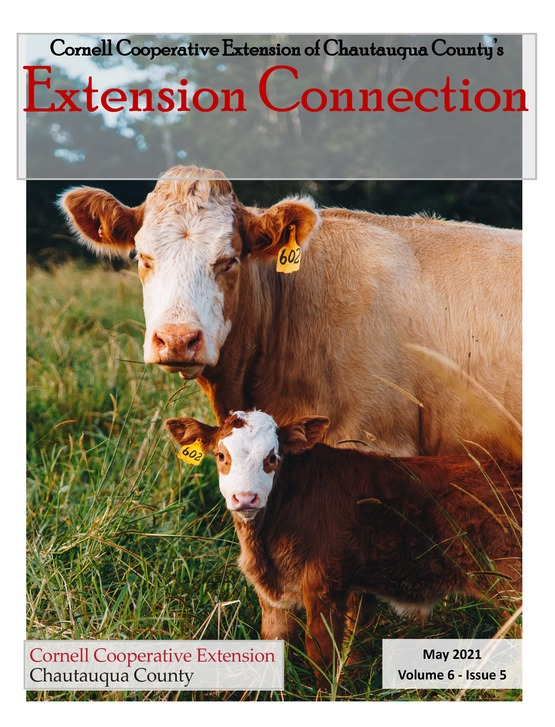Extension Connection May 2021